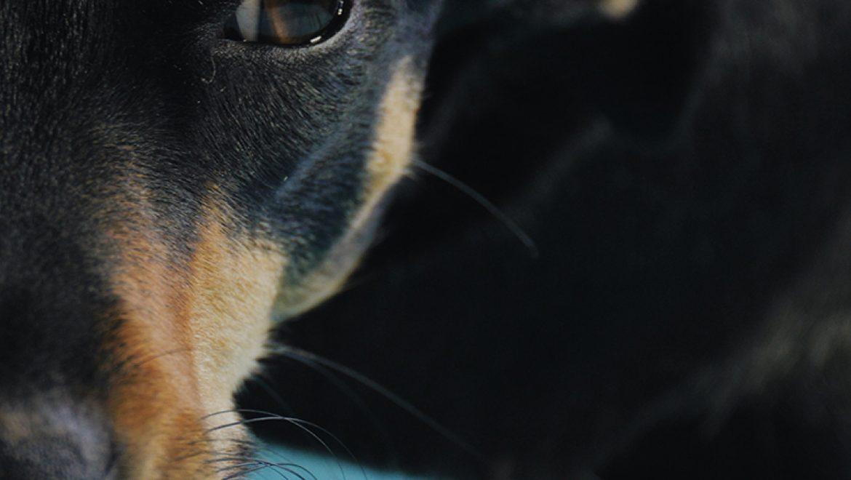 חיי אדם וחיי כלב